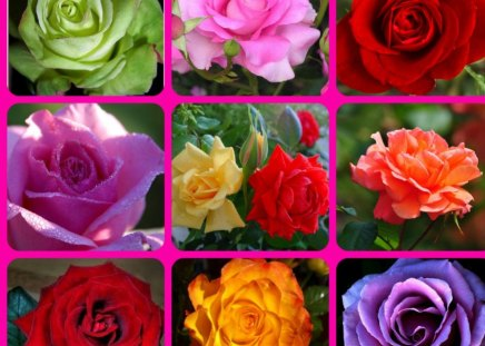 THE ROSES - pretty, collage, roses, flowers