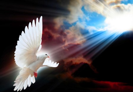 SHINE a LIGHT for PEACE - rays, peace, sky, bird flight, dove, sun