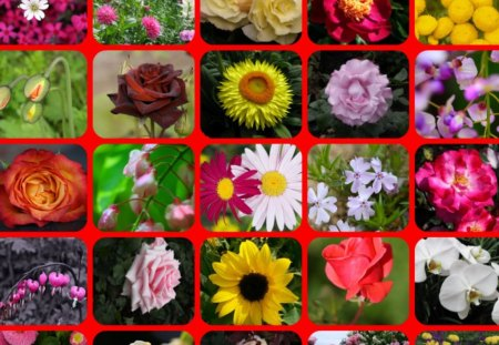 TWENTY FIVE FLOWERS - flowers, pretty, colours, collage