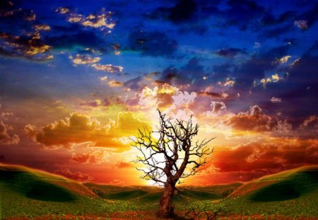 Dead tree at sunset - colorful, sunset, cloud, dead tree, sky