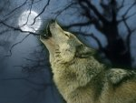 Howl to the Moon