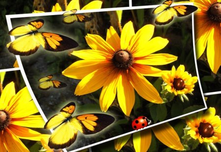 ♥      ~❁~   Summer Flowers   ~❁~      ♥ - summer, ladybug, abstract, yellow, butterfly, flower, yellow flowers, butterflies, sun, collages