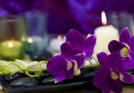 Heavenly scent - still life, delicate, nice, flame, treatment, rest, lovely, candle, scent, fragrant, spa, paradise, relax, violet, beautiful, flowers, pretty, heaven