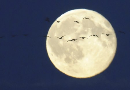 OVER THE MOON - evening, blue, silouettes, birds, full moon, flight, white, moons, space