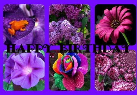 FOR DEAR PURPLE-HAZE - dear, birthday, happy, friend