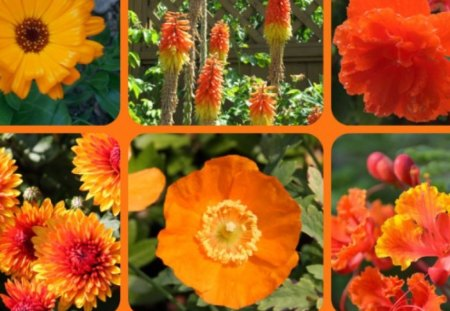 FOR DEAR BLANCHE, GUOGUOLE - flowers, friends, orange, collage