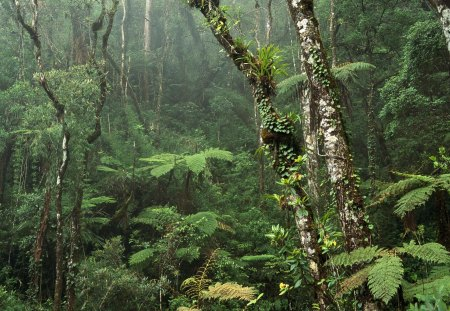 Amazon... - rainforest, thick, amazon, dense, forest, jungle