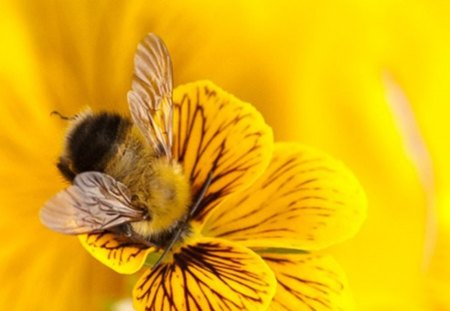 bee - honey, pollen, flower, bee