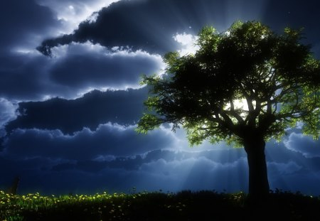 Night shine - dark, nature, tree, shine, night
