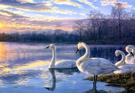 Swan Family - evening, lake, clouds, sky, artwork, nature