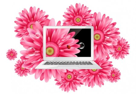 Gerbara laptop - flowers, pink, laptop, gerbera, pc, daisy