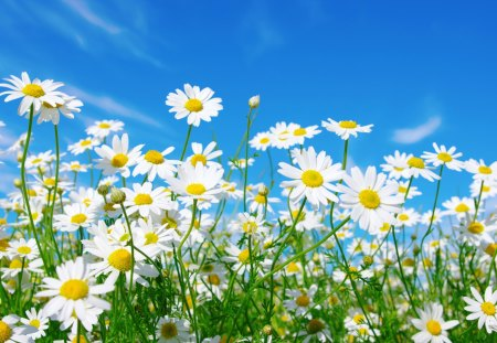 most beautiful flowers wallpapers free download