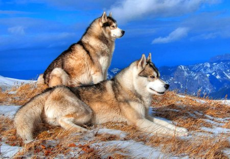 Handsome Couple - mountaintop, stare, peak, beautiful