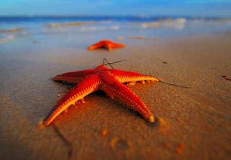 Stranded Starfish - water, red, sea, beach