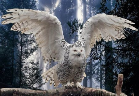 Taking Flight   for Carl {Googlehead} - animals, other, snowy owl, nature, birds