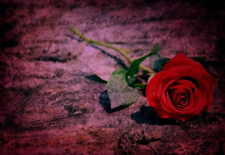 Love me, love me not - passion, rose, petals, beautiful, letters, pretty, lovely, romantic, leaves, lonely, nice, red rose, love, red, gift, romance