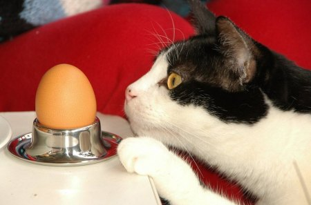 Who was first...? - table, paw, egg, cat, first, who