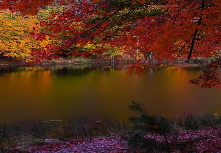 Dark Lake in Autumn - dark, trees, nature, fall, autumn, lakes
