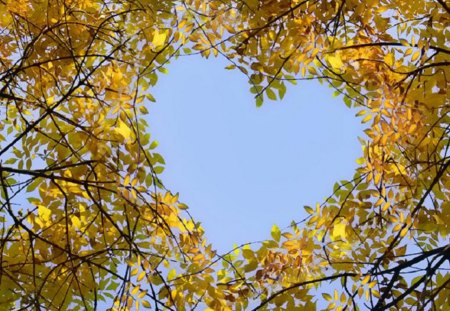 heart in the crown of trees - heart, leaves, sky blue, crown of trees, feeling, trees, birch, autumn, deciduous forest
