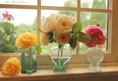 autumn roses - window, vases, roses, autumn