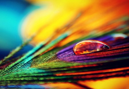 Colourful Feather - photo, feather, peacock, colourful