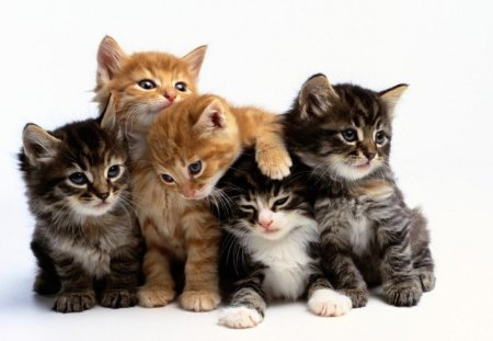 Cute kittens - baby, kitten, cat, cute, animal, pet