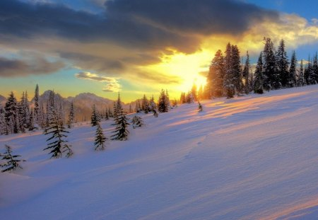 wonderful winter sunset - hill, trees, clouds, sunset, winter