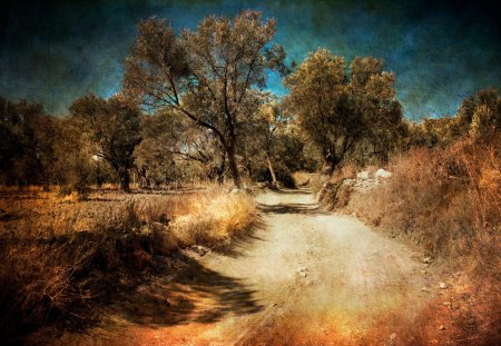 road less traveled - nature, photography, road, autumn