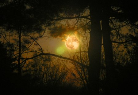 FULL MOON - moon, sky, nature, forest, night