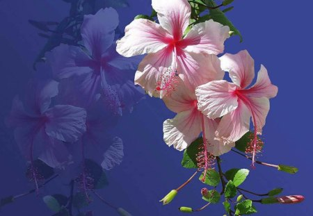 hawaiian flowers  flowers  nature background wallpapers on, Natural flower