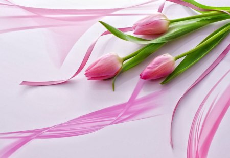 Pink tulips - three, tulips, pink, delicate, nice, harmony, ribbon, lovely, beautiful, flowers, pretty, gift, vail, fresh