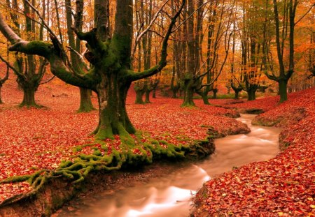 colors of autumn - colors, autumn, creek, forest, nature