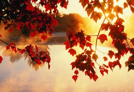 autumn on lake - lake, nature, autumn, fall leaves