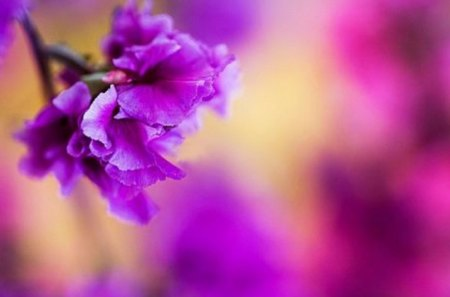 Purple Love - flower, love, purple, muted