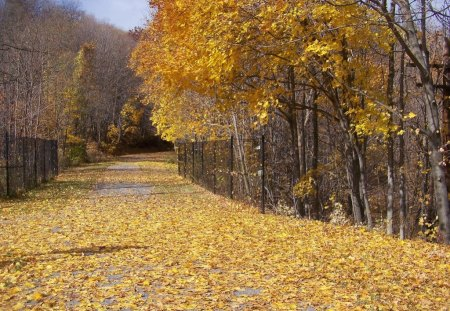 autumn road - yellow, autumn, trees, nature