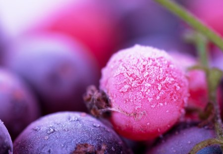 Forest fruits - summer, beautiful, pink, autumn, food, purple, nice, fruits, violet, delicious, forest, nature, juicy