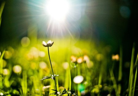 Amazing - green, light, amazing, summer, beautiful, field, sun, nature