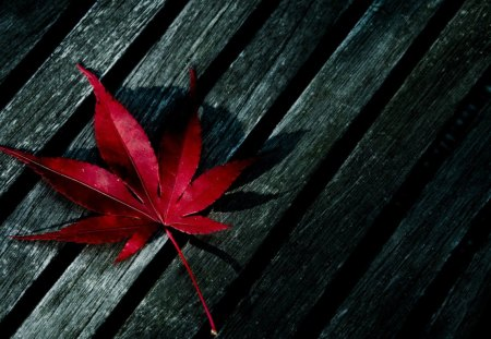 A leaf - lonely, evening, beautiful, grey, leaf, red, bloody, autumn