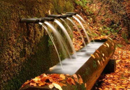 autumn spouts - autumn, water, wall, tub