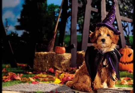 Halloween pups - dogs, halloween, fall, costume