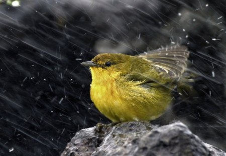 RAIN DANCE - bath time, feathered friends, seasons, birds, rain, garden birds, feathers, weather, gardens