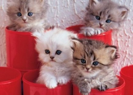kittens in a red pots - kittens, animals, red pots, cats