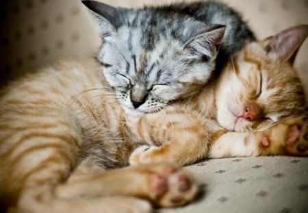 Cat - little, cat, sleeping, animals, kitten, nice, cute, kitty