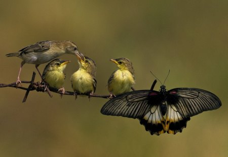 Special friends - wings, branch, birds, food, butterfly, eating, fence, feathers, family, feeding