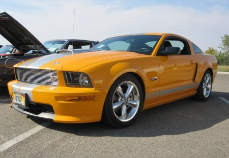 mustang - roush, mustang, saleen, for