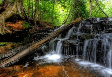 Quiet Cascade - brook, beautiful, creek, nature, trees