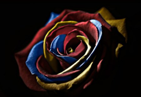 Multi Colored Rose - rose, abstract, beautiful, colorful