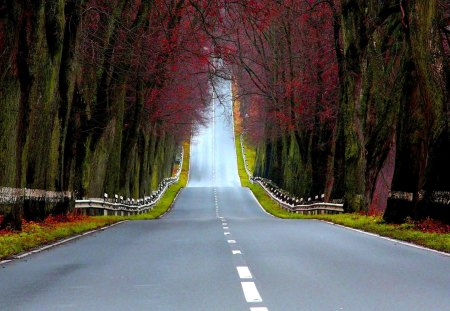 HIGHWAY to the NORTH - empty, lane, road, autumn, green, forest
