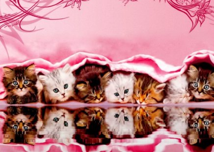 Kittens reflection - beautiful, reflection, pink, adorable, friends, water, funny, nice, photoshop, buddies, kittens, fluffy, cats, cute, lovely, kitties, sweet