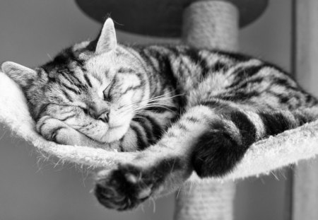 My weekend - sleping, animals, kitten, nice, funny, cute, kitty, pet, cat, humor, adorable, look